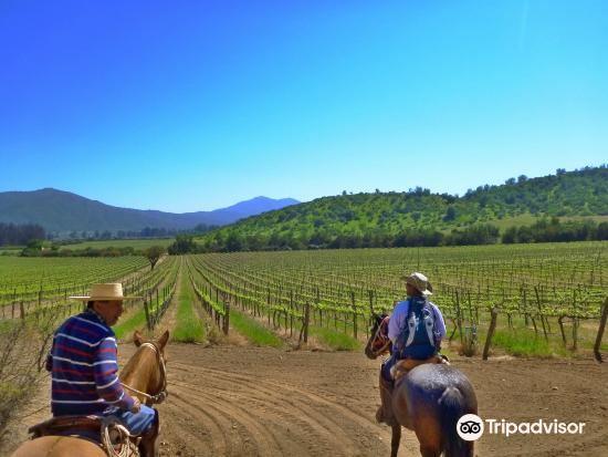 Loma Larga Vineyards & Winery1