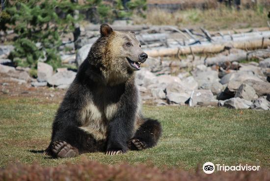 灰熊與狼保護中心3