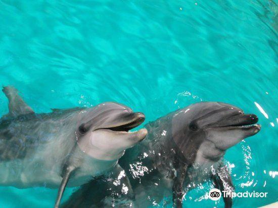 Asamushi Aquarium4