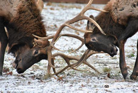 Lone Elk Park