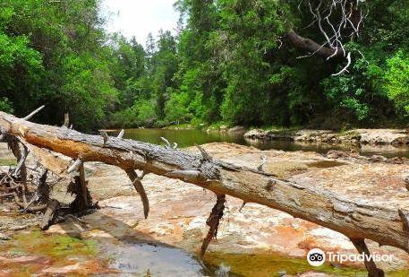 Magnolia Branch Wildlife Reserve