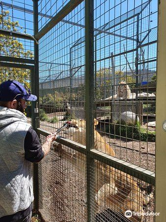 Zoodoo Wildlife Park1