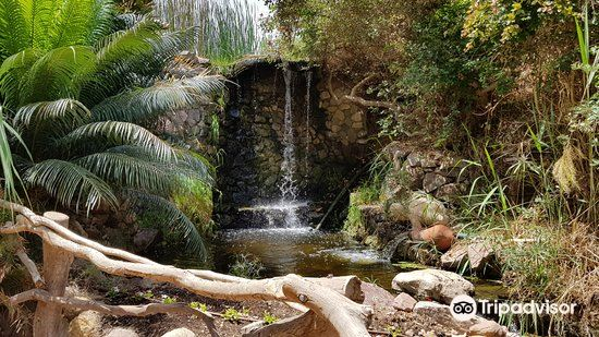 Botanical Garden Of Eilat1
