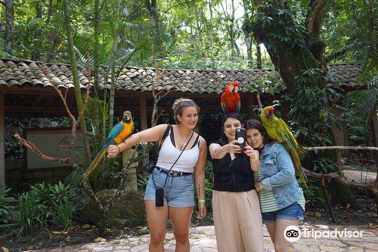 Macaw Mountain4
