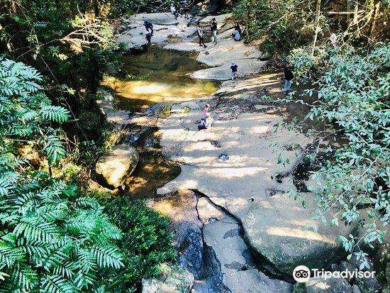 Buderim Forest Park2