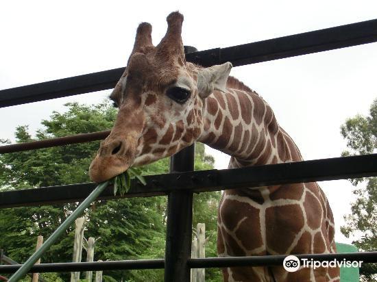 羽村市動物公園3