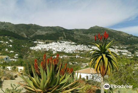 Botanical Garden of Cacti and Succulent Plants 'Mora i Bravard' of Casarabonela