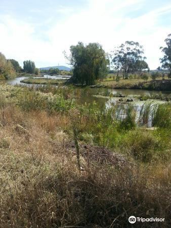 Jerrabomberra Wetland3