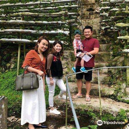 Kok Lim Strawberry Farm1