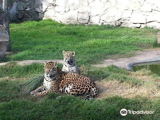 Zoo de Batan2