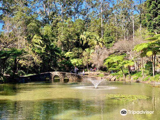 Tamborine Mountain Botanic Gardens2