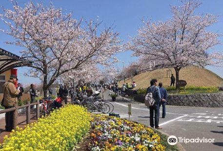 成田市櫻之山
