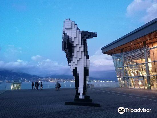 Digital Orca1