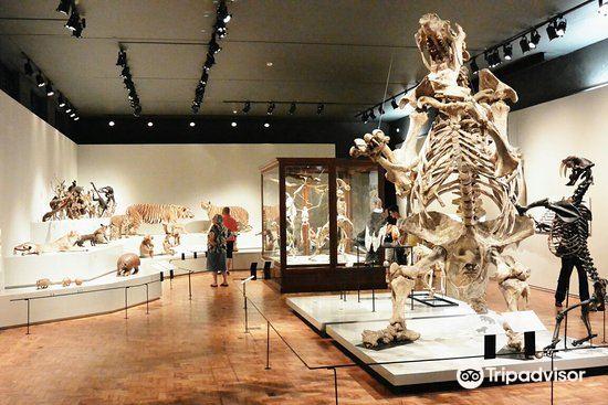 Sao Paulo Museum of Zoology4