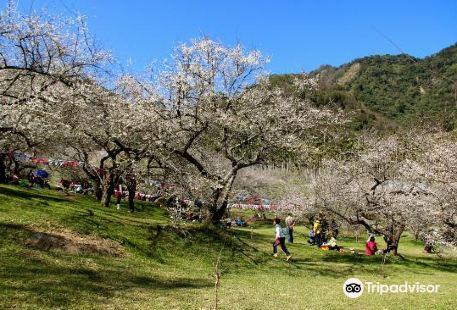 Liou Plum Farm