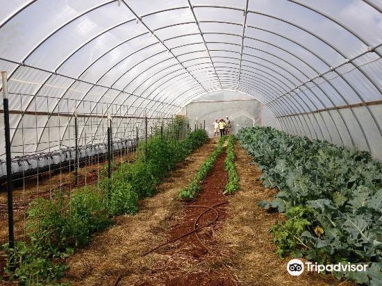 Kupa'a Farms1
