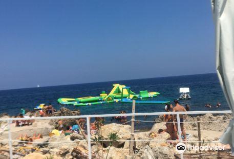 Bibi Summer