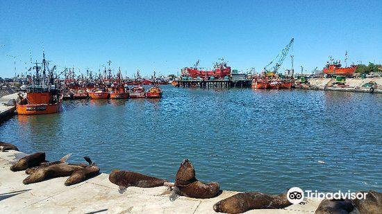 Puerto de Mar del Plata4