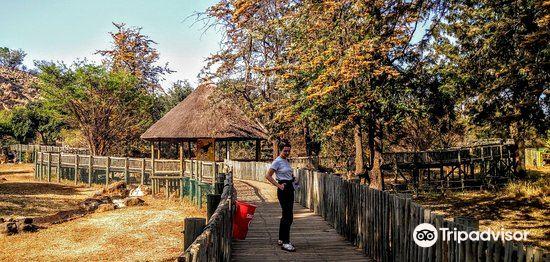 普利托裡亞動物園2