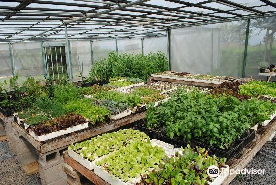 Kupa'a Farms4