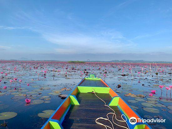 Thale Noi Waterbird Park