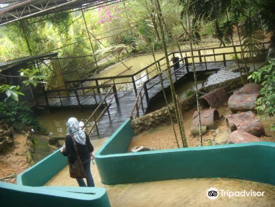 楊氏鱷魚場3