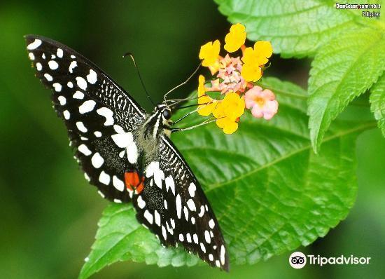 Jumalon Butterfly Sanctuary2