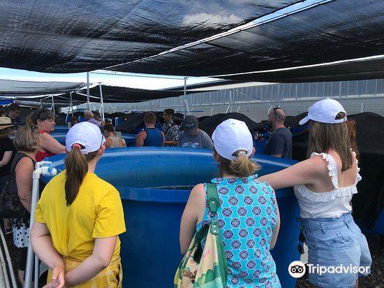 Ocean Rider Seahorse Farm1