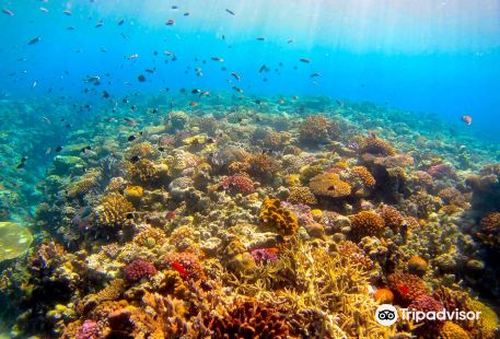 Dive Center Isles Okinawa