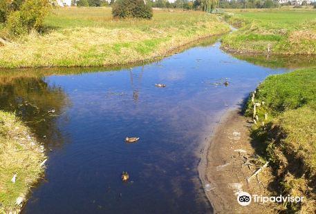 Skrzyżowanie rzek w Wagrowcu