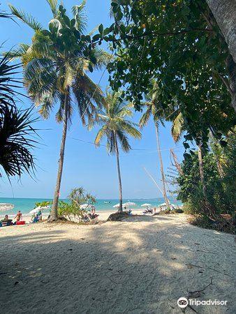 Coconut Beach3