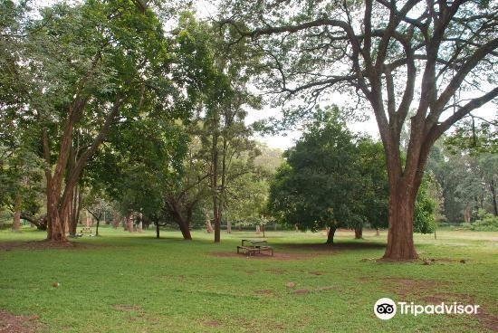 Nairobi Arboretum4