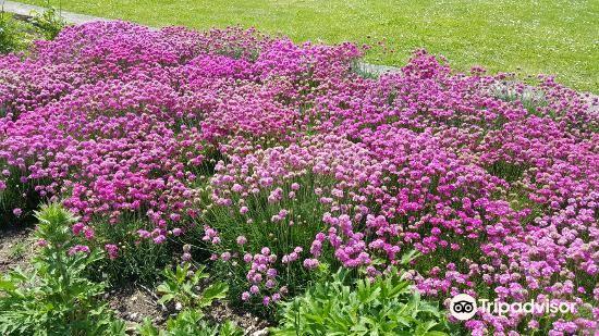 Southsea Rose Garden4