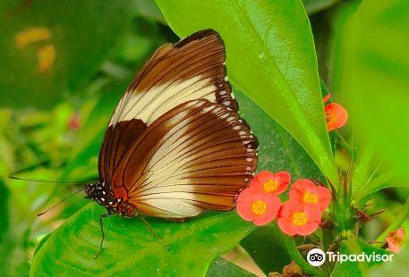 La Serre aux Papillons
