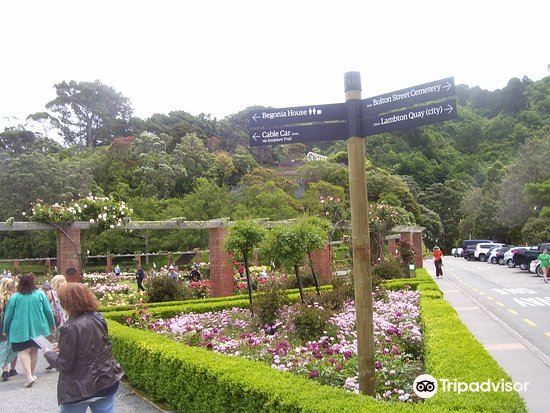 Lady Norwood Rose Garden1
