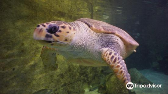 Manly Sea Life sanctuary4