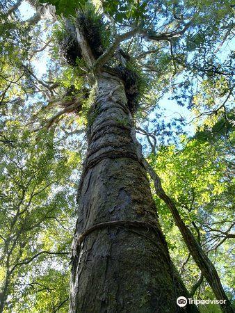 Otari-Wilton's Bush3