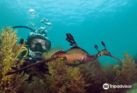 Bayplay-Discover SCUBA Diving!
