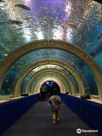 Asamushi Aquarium1