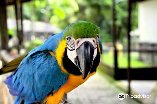 Penang Bird Park2