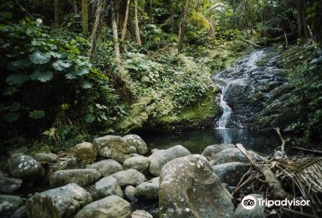 Toro Negro State Forest