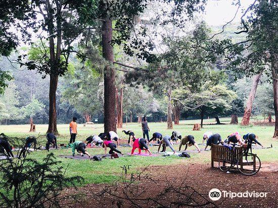 Nairobi Arboretum2
