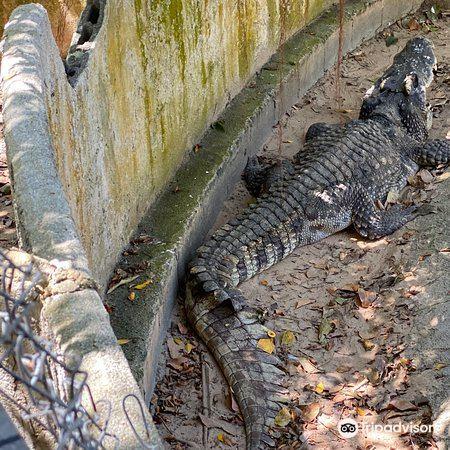 鱷魚農場2