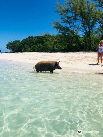Abaco Tours & Activities