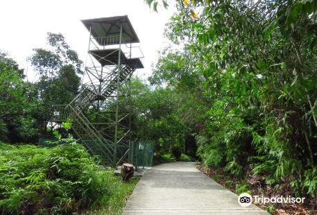 山打根熱帶雨林公園 Sandakan Rainforest Park