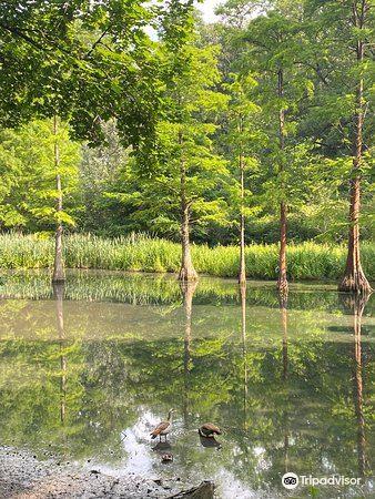 Botanischer Garten Rombergpark4