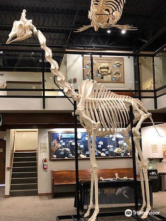 Museum of Osteology1