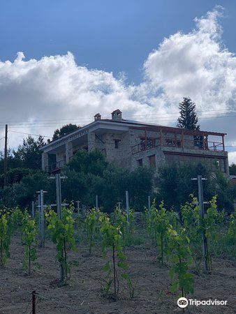 Tsangarides Winery3