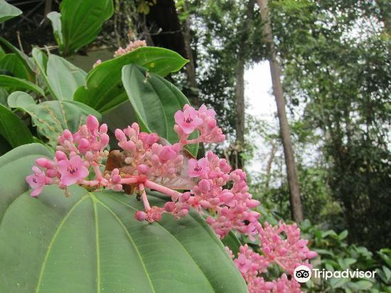 Botanical Garden4