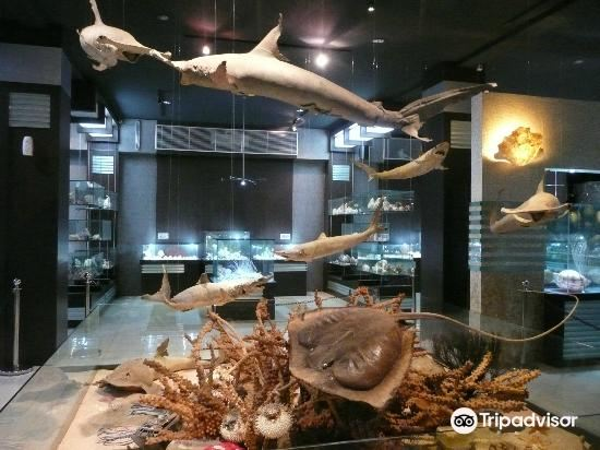 Fantasea Bali Shell Museum1
